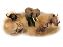 Big Five in Kenya